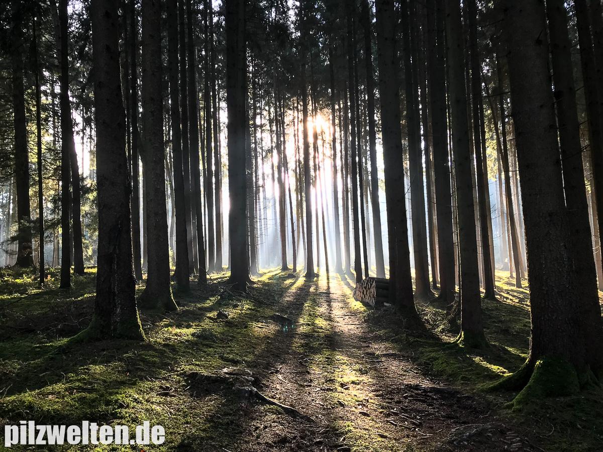 www.pilzwelten.de